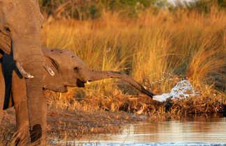 Éléphanteau dans la savane