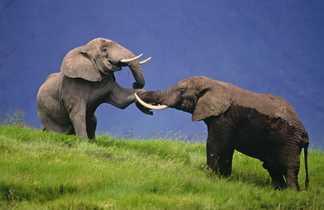 Elephants au Parc de Manyara