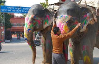 elephants décorés de peintures colorées, Rajasthan