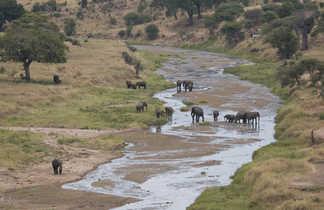 Eléphants traversant la rivière Tarangire
