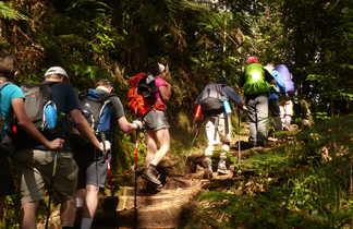 En route dans la jungle vers Machame Camp
