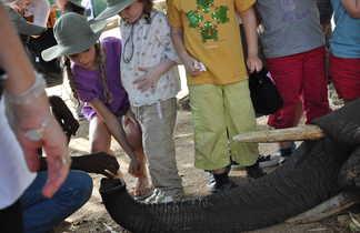 Enfants donnant à manger à un éléphant en Afrique du Sud