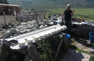 Fabrication du fromage de brebis dans une bergerie corse