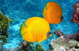 Faune sous marine dans les Tuamotusa