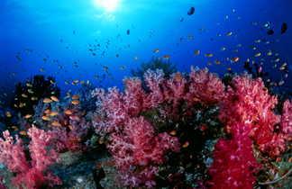 Fond marin  en Thaïlande