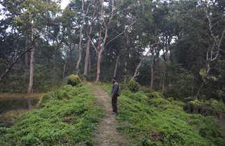 Forêt de Chitwan