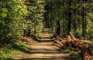 Forêt du Goulet sur le Chemin de Stevenson
