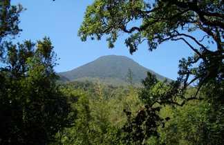 Forêt impénétrable du parc national de Bwindi