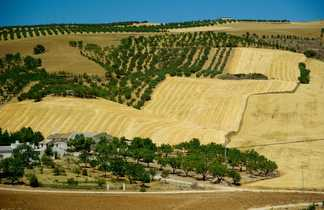 Hacienda andalouse
