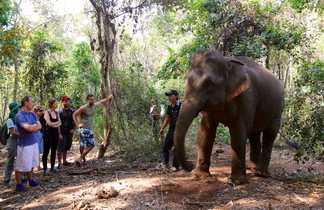Eléphant Laos