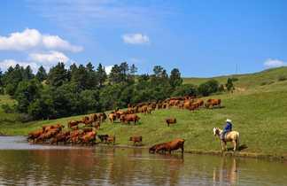 Immersion équestre dans un ranch du Wyoming