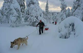 Itinérance en raquettes, avec chien et pulka