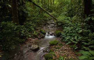 Kinabalu jungle