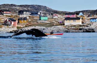 Kayak de mer parmi les baleines en Arctique, Groenland