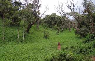 forêt équatorial sur le Kilimandjaro