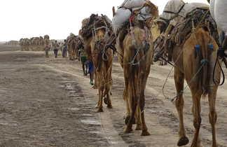 La caravane de sel Afar dans la région du Dallol en Ethiopie