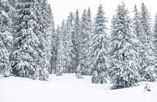 Paysage de Finlande l'hiver, forêt de conifères