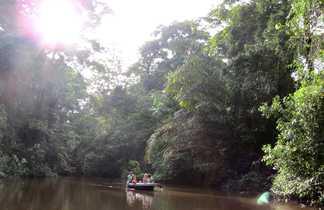 tortuguero, tortues, costa rica, faune