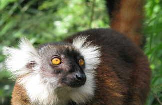 Lémurien à Nosy, Madagascar