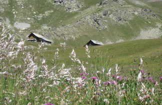 les alpages de Clapeyto, vallée du Queyras-Alpes du sud