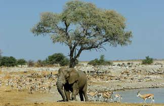 Les animaux dans le parc national d'Etosha en Namibie