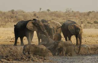 Les éléphants du désert de Namibie
