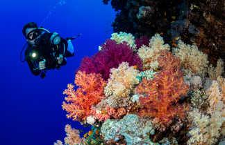 Les photographes sous-marins ne se lassent pas des décors de Mer Rouge