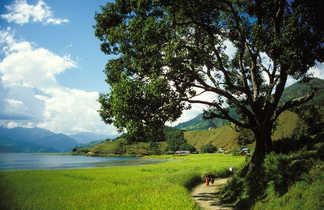 Les rives du lac Phewa, près de Pokhara