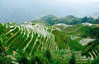 Les rizières de Guangxi en Chine