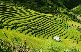 Les rizières du nord Vietnam
