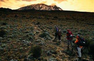 Marche d'approche vers les sommets du Kilimandjaro