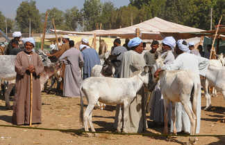 marché de bestiaux à Daraw