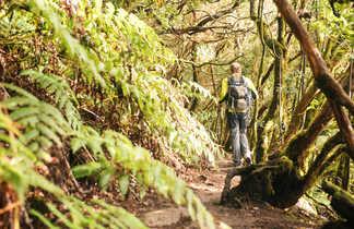 Marcheur dans une forêt à Tenerife aux Canaries
