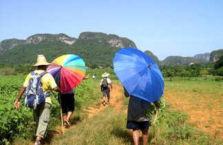 Marcheurs se protégeant du soleil avec des parapluies dans la vallée de Vinalès à Cuba