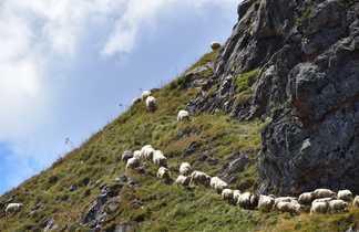 Moutons dans les Hautes Pyrénées lors d'un trek en refuge