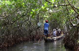 Navigation dans la mangrove