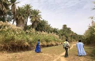Oasis Azouaiga, Mauritanie