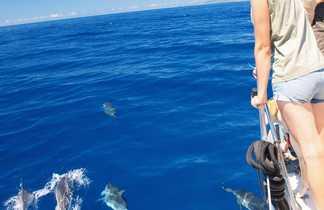 Excursion d'observation des dauphins aux Açores