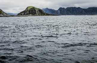 Voyage norvège finlande oiseaux