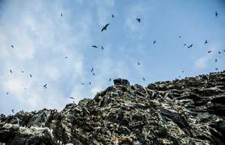 Observation d'oiseaux en Norvège