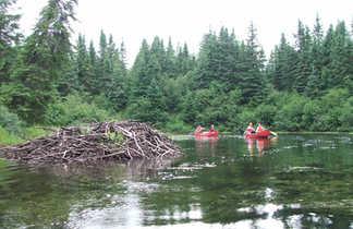 Observation du castor en canoë  avec le Centre d'Aventure de Mattawin