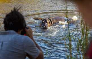 Observation d'un hippopotame pendant un safari en Afrique du sud
