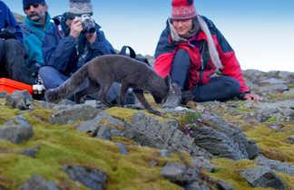 Observation d'un renard polaire lors d'un pic nique au Spitzberg