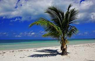 Palmier et plage paradisiaque à Cuba
