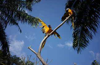 Parc aux oiseaux, Bali, Indonesie