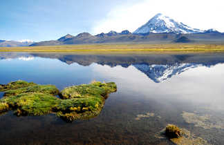 Parc National de Sajama, Oruro, Bolivie