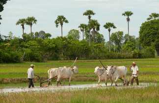 Paysage de campagne au Cambodge