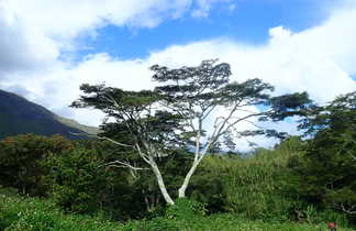 Paysage et arbres en Papouasie