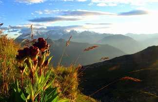 Paysage fleuri dans le massif alpin des Aiguilles Rouges