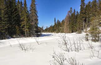 Paysage sous la neige au Québec